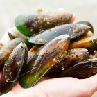 Green Lipped Mussel Brands Compared