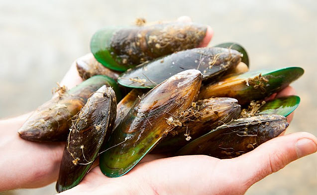 greenlippedmussels