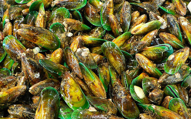 greenmussels
